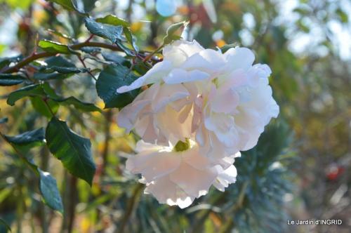 jardin, feuilles,sauges,gloriette,land art 026.JPG