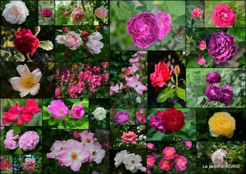 2015-06-18 jardin,les filles,gerbera,Lalinde2.jpg