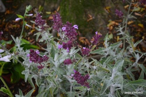 Neuvic,jardin,champignons canal 140.JPG
