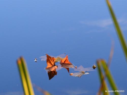 jardin automne,voisinage,canal 084.JPG