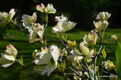 geais,jardin,printemps 077.JPG