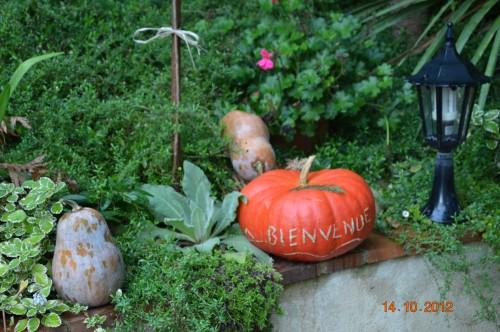 champignons,citrouilles,st Mayme de Péreyrol,fuschias,jardin aut 152.JPG