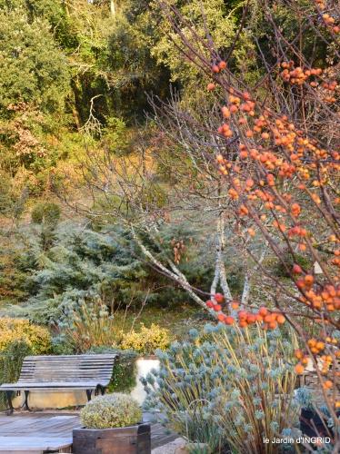 jardin givré,taille de prunus 046.JPG