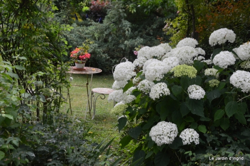 en juin jardin 217-001.JPG