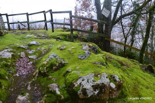 bulbes,perce neige,narcisse,pluie,hélébore,chapelle 133.jpg