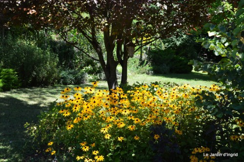 jardin,canal,oies,tournesols,bracelets,visites 004.JPG