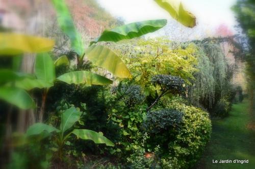 jardin automne ,travaux feuilles 005.JPG