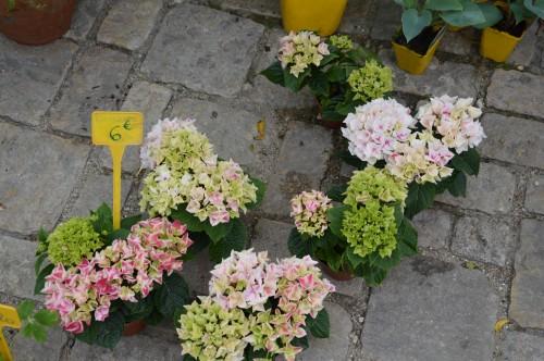 CADOUIN,cascade,iris,roses,fl.sauvages 069.JPG