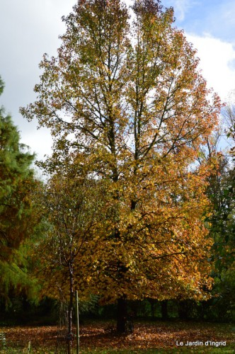 automne,arbres,inondation 099.JPG