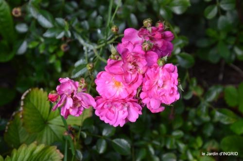 Ines,jardin,lagestromia,brocante Lalinde 022.JPG