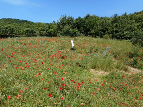 Normandie,jardin Monet,baie de Somme,chez Marylaur 238.JPG