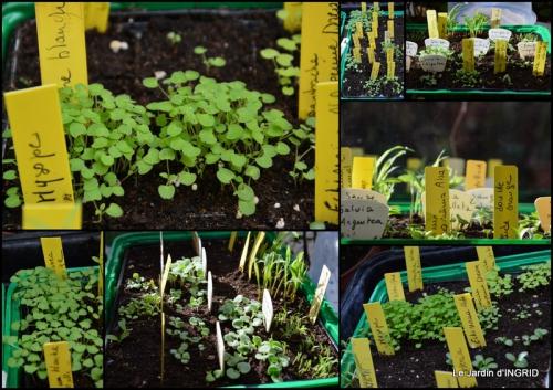 2015-03-19 semis,taille,tonte,tour du jardin.jpg