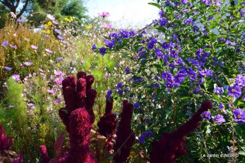 jardin Mme Perichou,grandes fleurs,bouquet,jardin 012.JPG