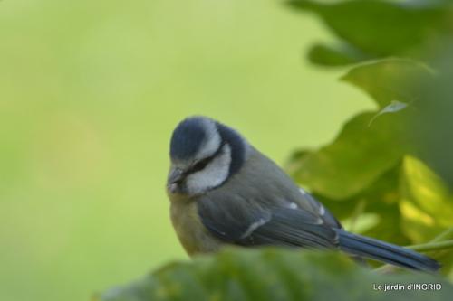 les oiseaux 110.JPG