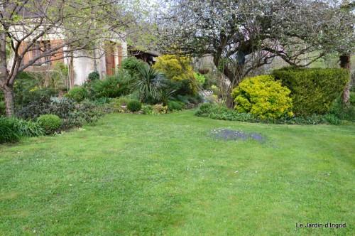 paquerettes,arums,laurier palme,jardin 056.JPG