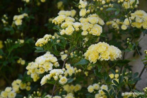 colline,orchidée,nature,jardin fleuri 022.JPG