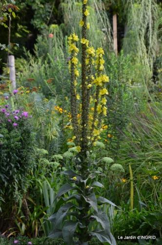 confiture,bouquet,petit jardin 043.JPG