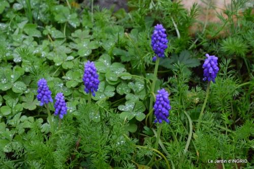 jardin (3 semaine de mars) 099.JPG