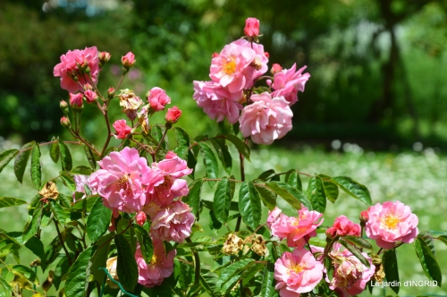 jardin,st Astier,colline 081.JPG