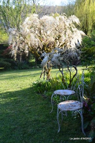 jardin confiné ,osier,magnolia jaune 163.JPG
