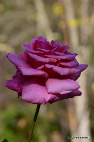 kakis,dernières fleurs,pt jardin,Julie,bassin 051.JPG