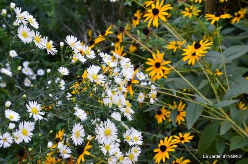 jardin Mme Perichou,grandes fleurs,bouquet,jardin 077.JPG