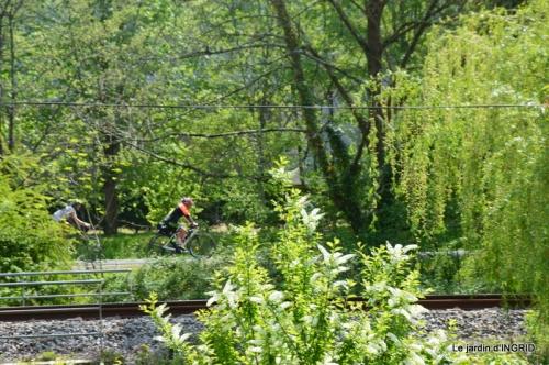 cygnes,cartes,scènes de jardin,;rosier de Banks 071.JPG