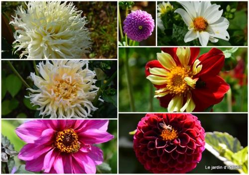 2015-07-03 bouquet,Lalinde,carabe,dégats3.jpg