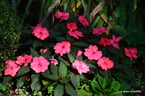 citrouille fleurie,décos jardin,automne 070.JPG