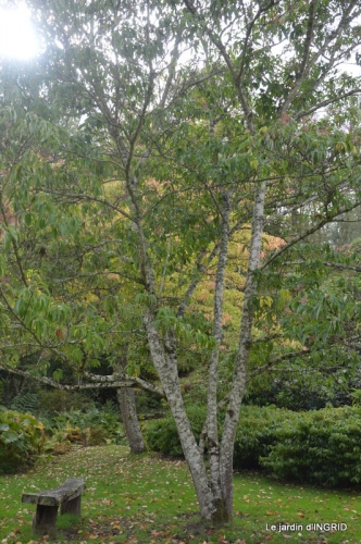 la Sedelle,étang de Riault,cyclamens 050.JPG