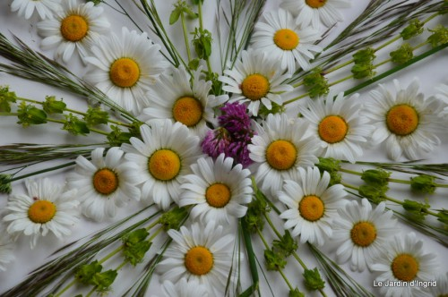 fleurs Beaumont,bouquet,tableau,serre,plants 043.JPG
