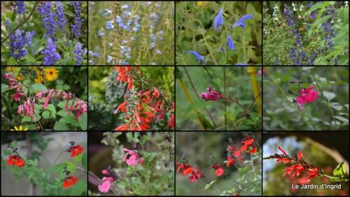 2013-10-06 mariage,jardin,la Brande,figues3.jpg