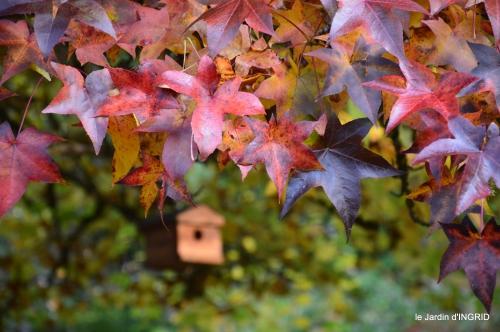 automne 2016 071.JPG