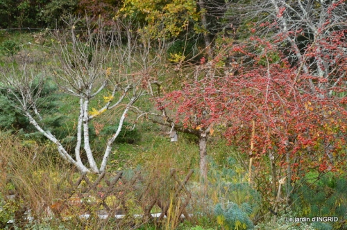 troc,automne,serre 017.JPG