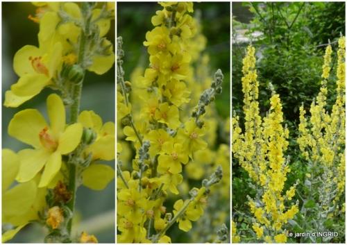 2019-07-01 sentier des cygnes,hémérocalles,bouquet,jardin.jpg
