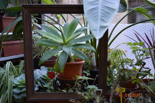 mesanges à longues queues,orchidées,neige2013 089.JPG