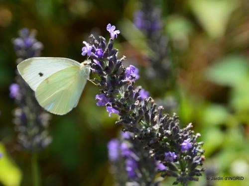 libellules,papillon,jardin,Froidefond,David,Meyrals 007.JPG