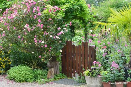 cygnes,Sophie,jardin en mai 073.JPG