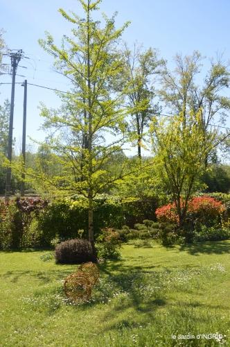 colline,orchidée,nature,jardin fleuri 141.JPG