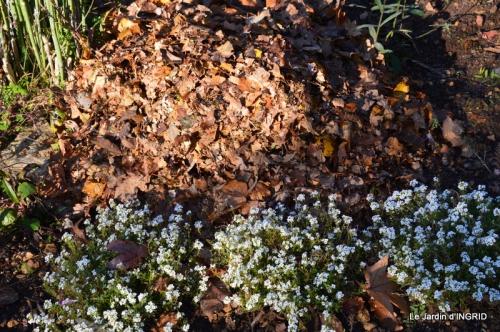 jardin, feuilles,sauges,gloriette,land art 074.JPG