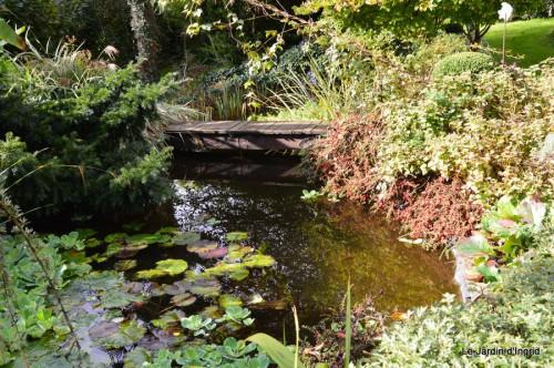 ménage automne,plectanthrus,feuillages 122.JPG