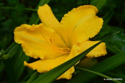 jardin,chez Bernadette,puces,cygnes,pluie 102.JPG