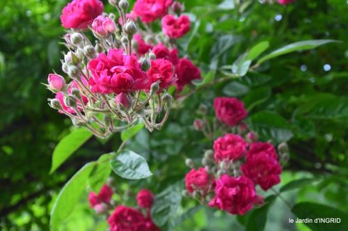 jardin,portes ouvertes,Julie 093.JPG