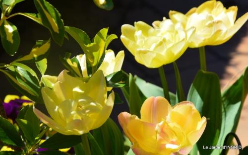 jardin printemps 017.JPG