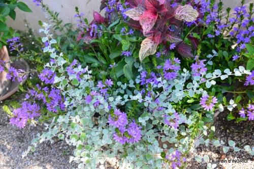 jardin juin,cabane,bouquet 005-001.JPG