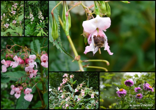 2016-09-13 bouquet,jardin de Monet,les vaches,Pourville sur mer6.jpg