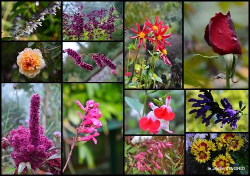2016-10-07 cygnes,jardin,apres la tonte3.jpg