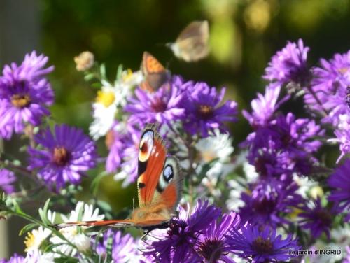 papillons,couleurs d'automne,Bernadette,pluie 027.JPG