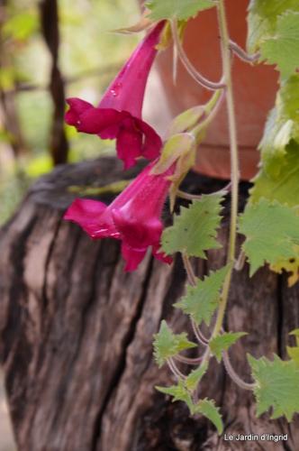 jardin serre bucher automne 040.JPG