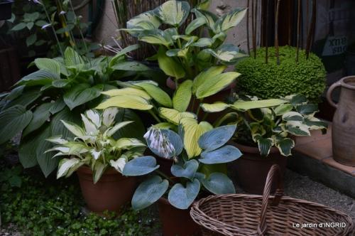 albizia,bouquet,plantes  en A 062.JPG